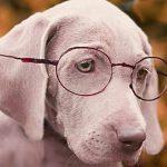 眼鏡・メガネ・めがね